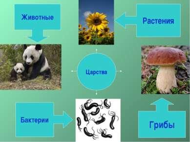Царства Растения Грибы Бактерии Животные