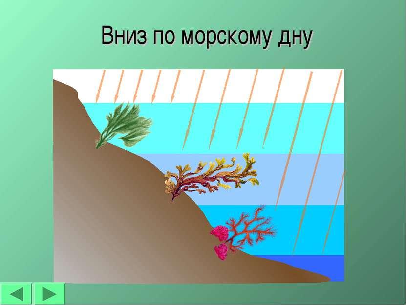 * Вниз по морскому дну