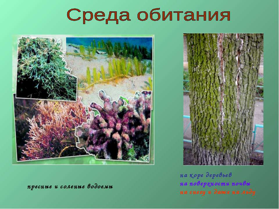 пресные и соленые водоемы на коре деревьев на поверхности почвы на снегу и да...