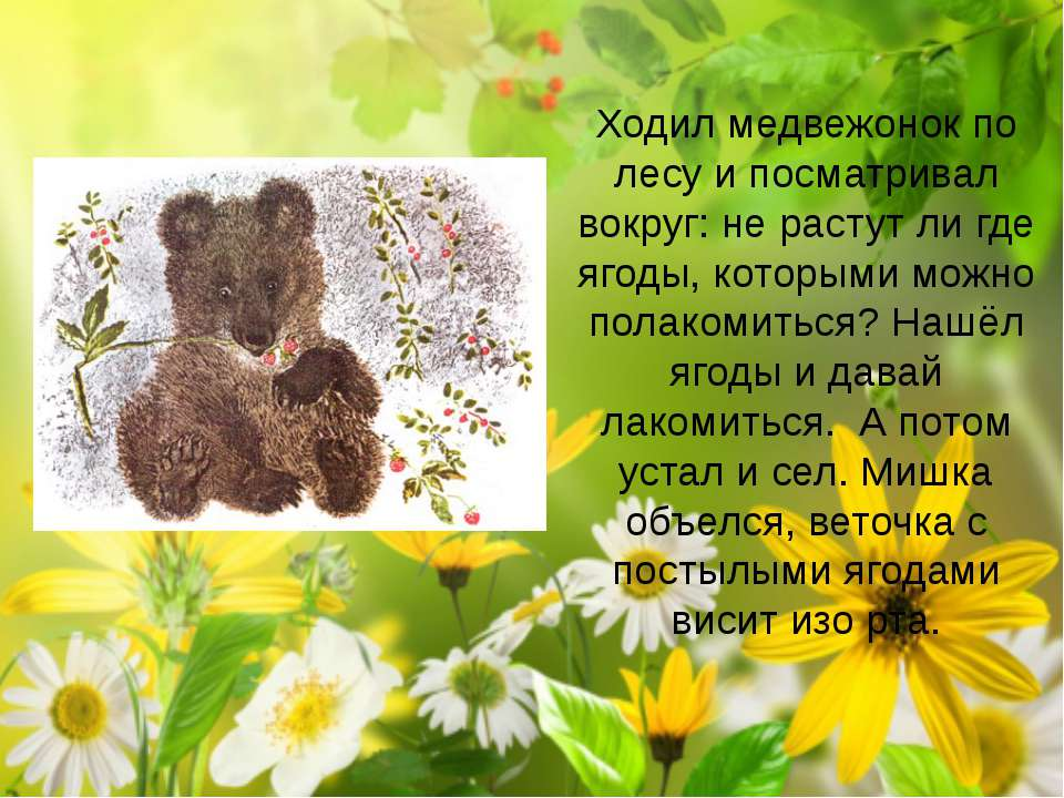 Ходил медвежонок по лесу и посматривал вокруг: не растут ли где ягоды, которы...