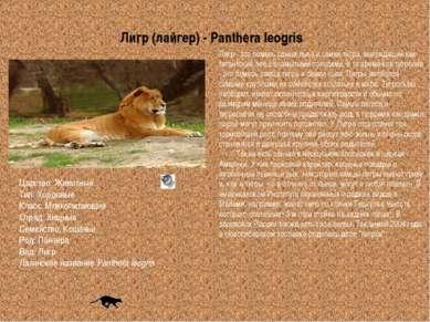 Царство: Животные Тип: Хордовые Класс: Млекопитающие Отряд: Хищные Семейство:...