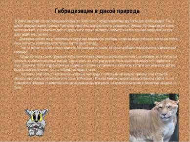 Гибридизация в дикой природе В дикой природе случаи скрещивания дикого животн...