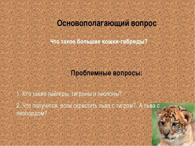 Основополагающий вопрос Проблемные вопросы: Что такое большие кошки-гибриды? ...