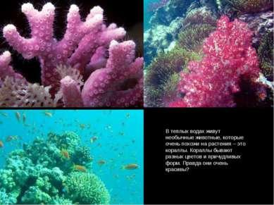 В теплых водах живут необычные животные, которые очень похожи на растения – э...