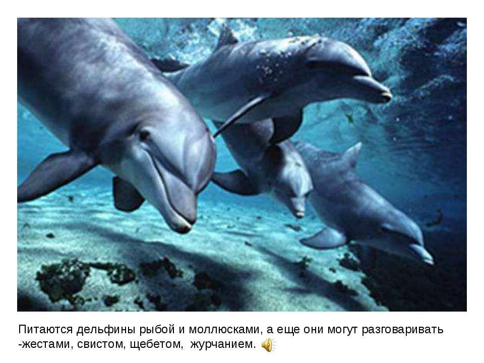 Питаются дельфины рыбой и моллюсками, а еще они могут разговаривать -жестами,...