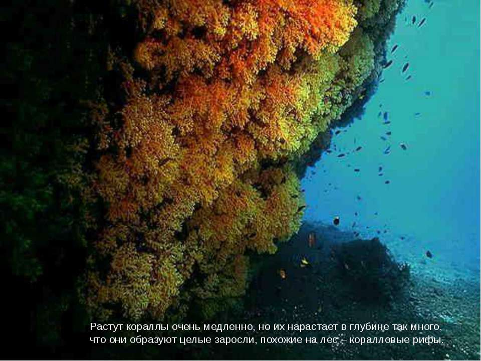 Растут кораллы очень медленно, но их нарастает в глубине так много, что они о...