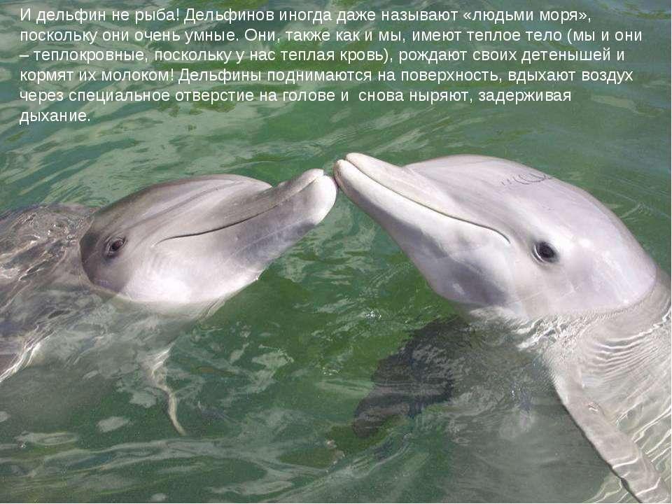И дельфин не рыба! Дельфинов иногда даже называют «людьми моря», поскольку он...