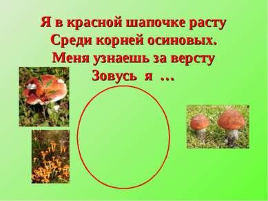 Я в красной шапочке расту Среди корней осиновых. Меня узнаешь за версту Зовус...