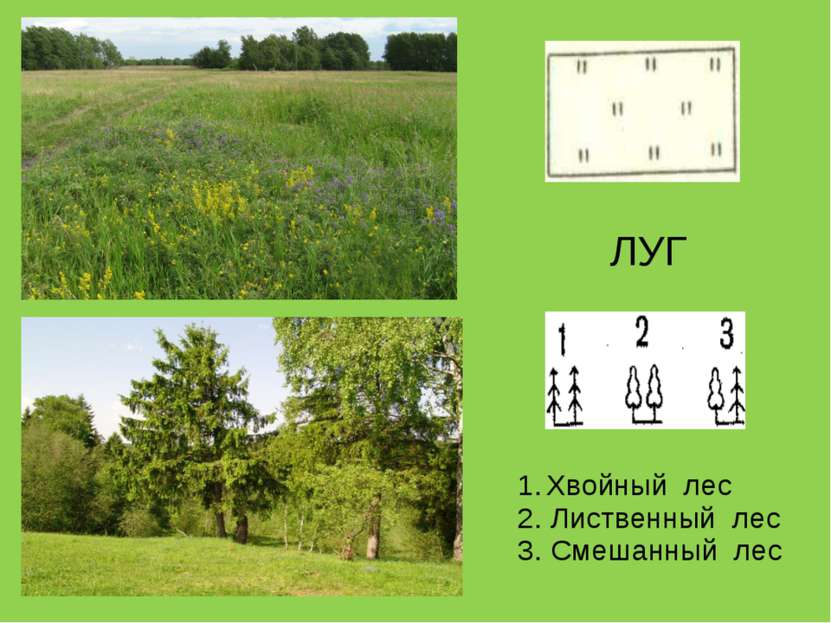 ЛУГ Хвойный лес 2. Лиственный лес 3. Смешанный лес