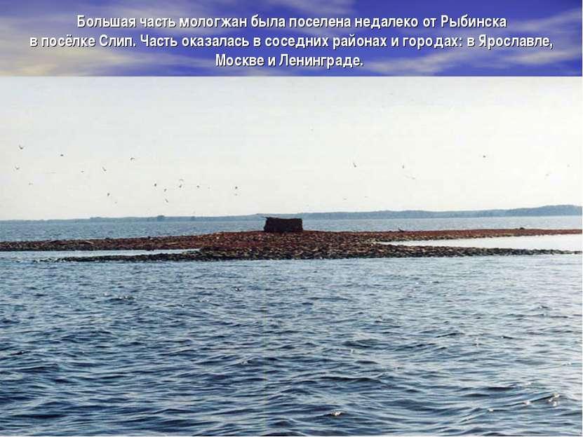 Большая часть мологжан была поселена недалеко от Рыбинска в посёлке Слип. Час...