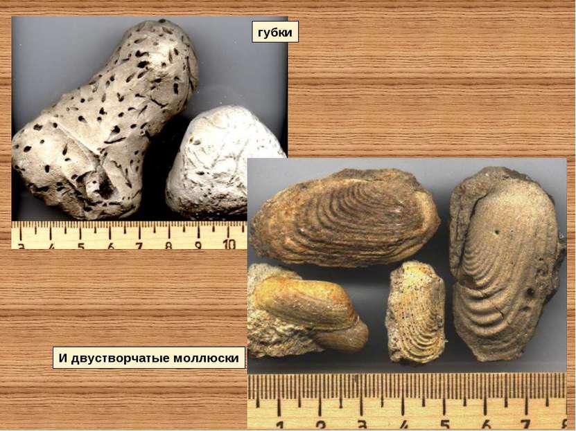губки И двустворчатые моллюски