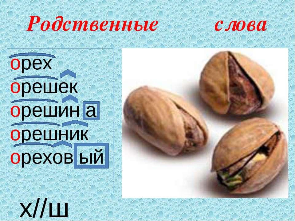 Родственные слова орех орешек орешин а орешник орехов ый х//ш
