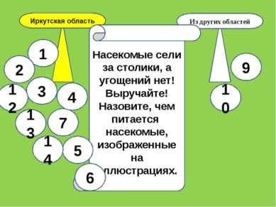 Иркутская область Из других областей Насекомые сели за столики, а угощений не...