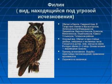 Филин ( вид, находящийся под угрозой исчезновения) Обитает в Европе, Северной...