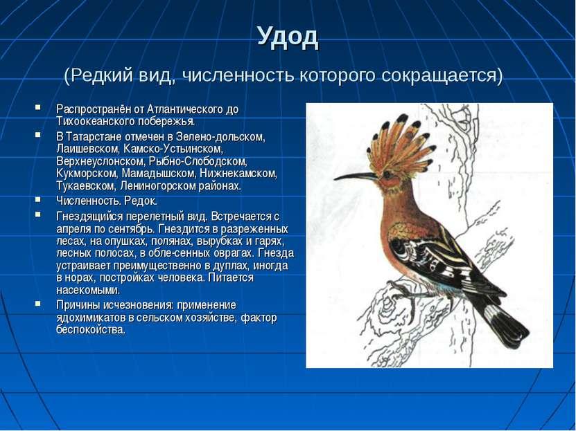 Удод (Редкий вид, численность которого сокращается) Распространён от Атлантич...