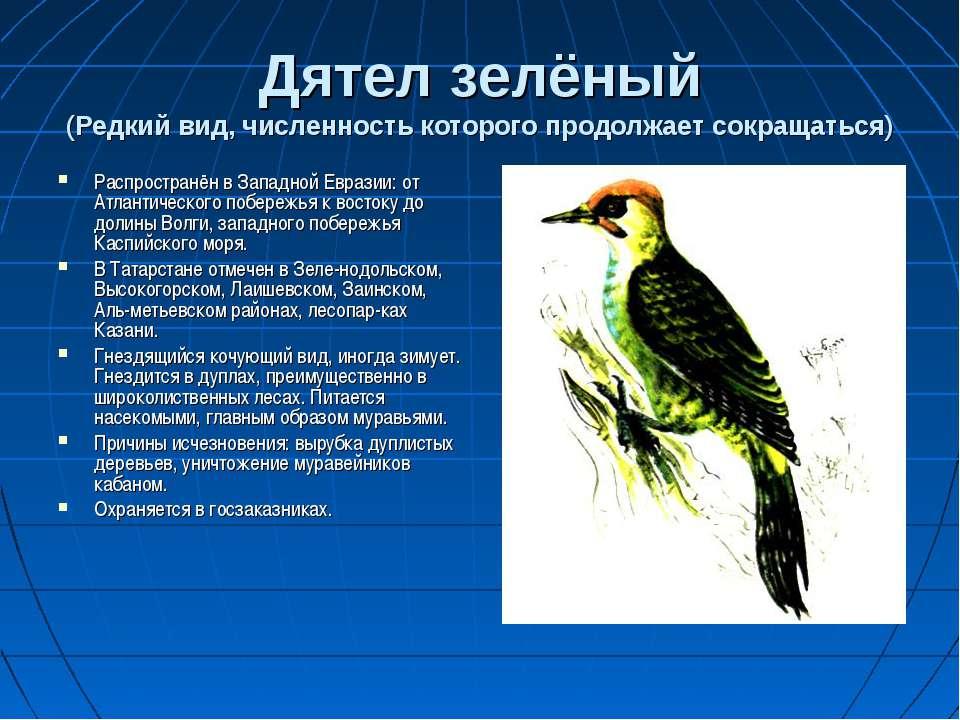 Дятел зелёный (Редкий вид, численность которого продолжает сокращаться) Распр...