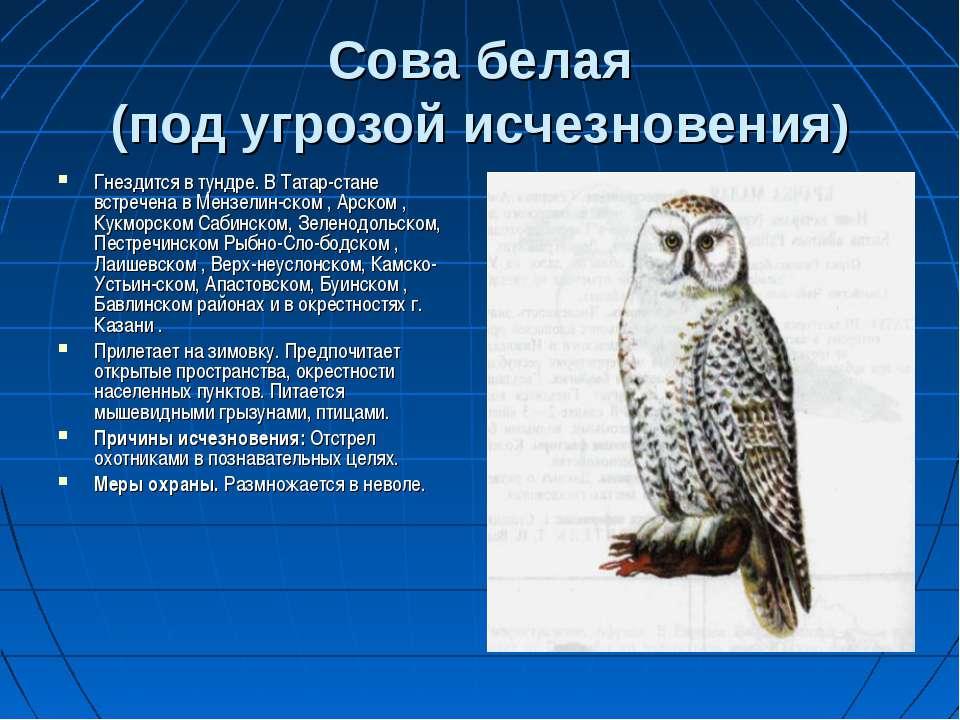 Сова белая (под угрозой исчезновения) Гнездится в тундре. В Татар-стане встре...