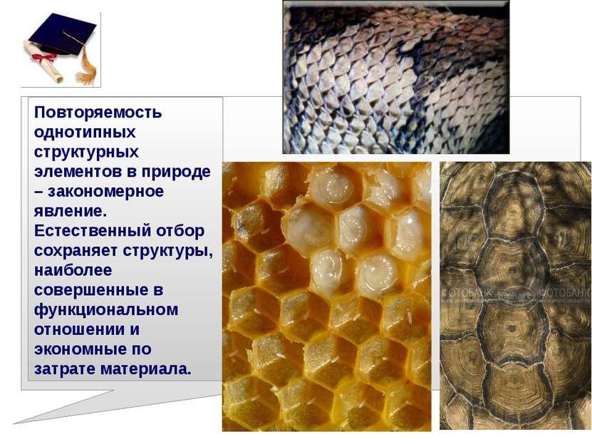 Повторяемость однотипных структурных элементов в природе – закономерное явлен...