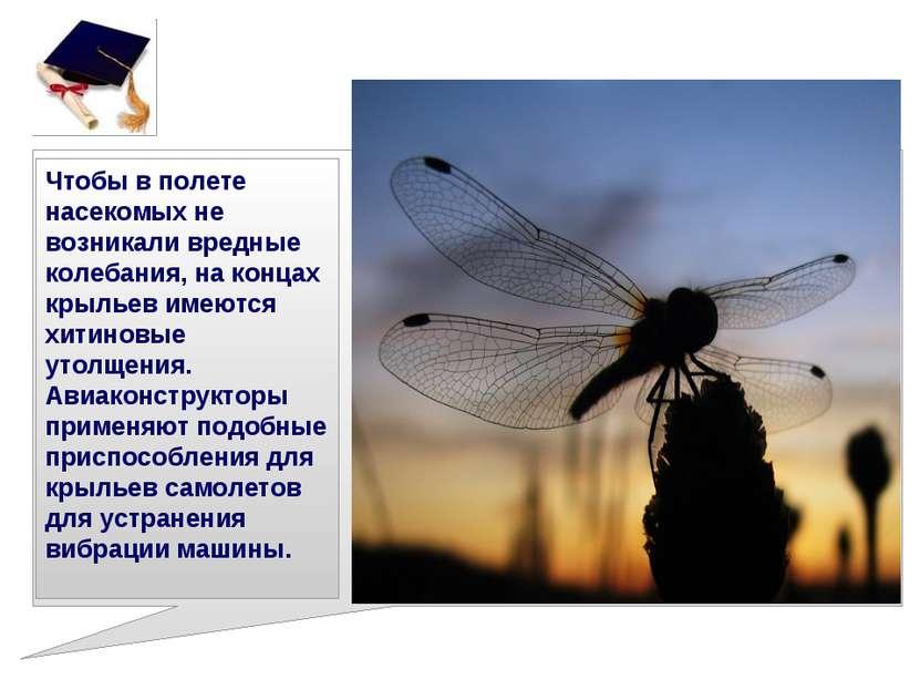 Чтобы в полете насекомых не возникали вредные колебания, на концах крыльев им...