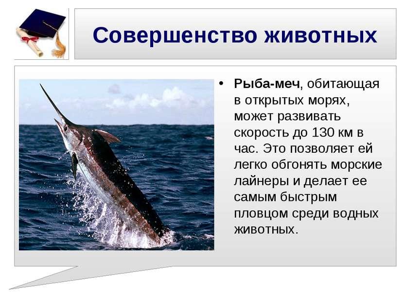 Совершенство животных Рыба-меч, обитающая в открытых морях, может развивать с...