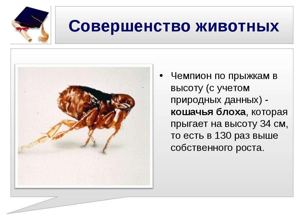 Совершенство животных Чемпион по прыжкам в высоту (с учетом природных данных)...