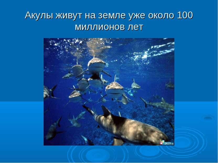 Акулы живут на земле уже около 100 миллионов лет