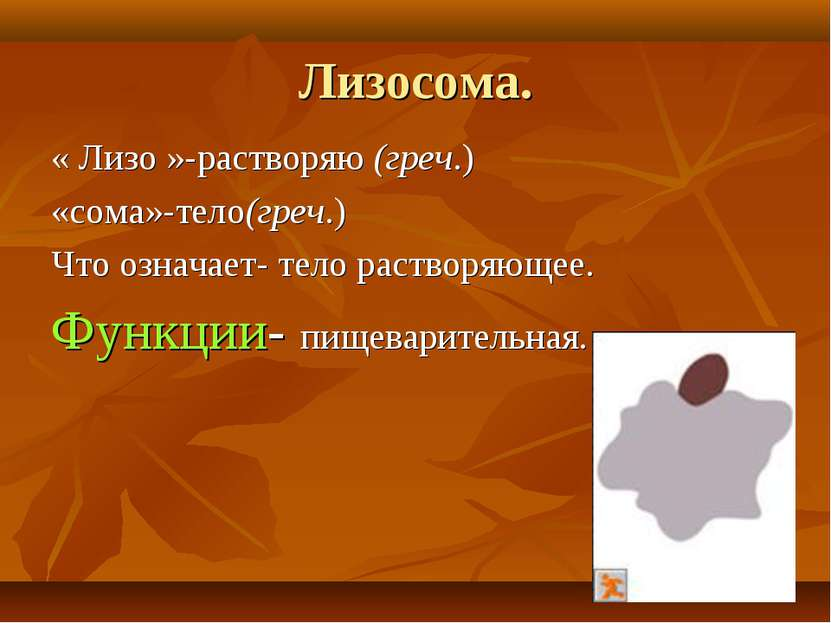 Лизосома. « Лизо »-растворяю (греч.) «сома»-тело(греч.) Что означает- тело ра...