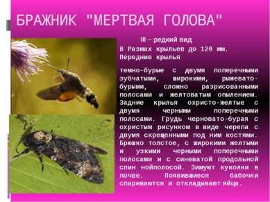 """БРАЖНИК """"МЕРТВАЯ ГОЛОВА"""" В Размах крыльев до 120 мм. Передние крылья темно-бу..."""