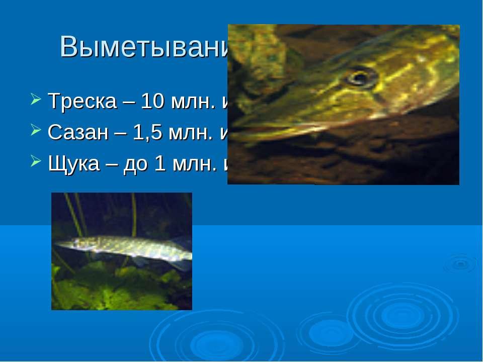 Выметывание икры в воду Треска – 10 млн. икринок Сазан – 1,5 млн. икринок Щук...