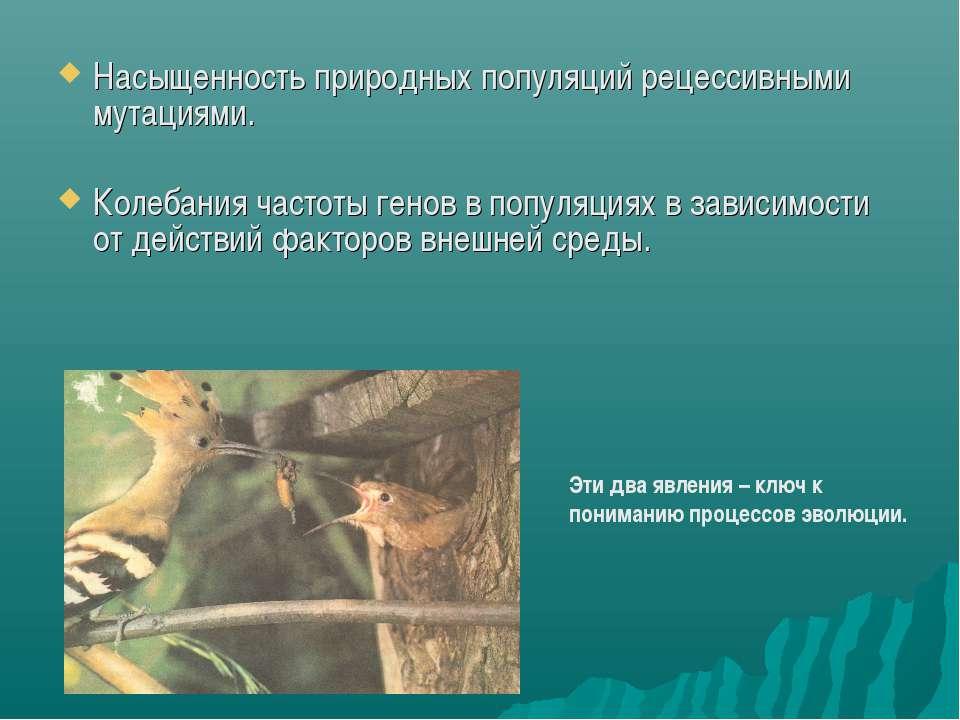 Насыщенность природных популяций рецессивными мутациями. Колебания частоты ге...