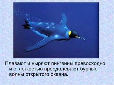 Плавают и ныряют пингвины превосходно и с легкостью преодолевают бурные волны...