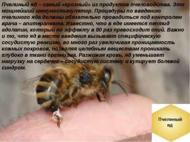 Пчелиный яд – самый «грозный» из продуктов пчеловодства. Это мощнейший иммуно...