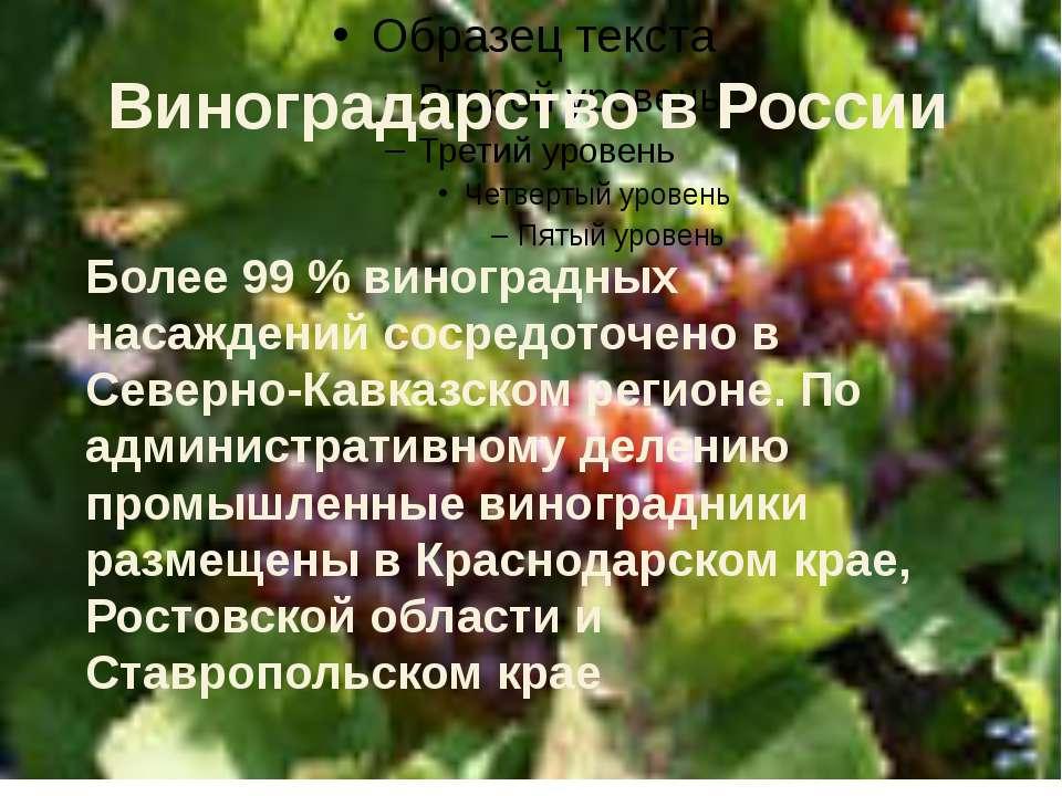 Более 99 % виноградных насаждений сосредоточено в Северно-Кавказском регионе....