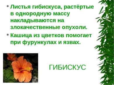 ГИБИСКУС Листья гибискуса, растёртые в однородную массу накладываются на злок...