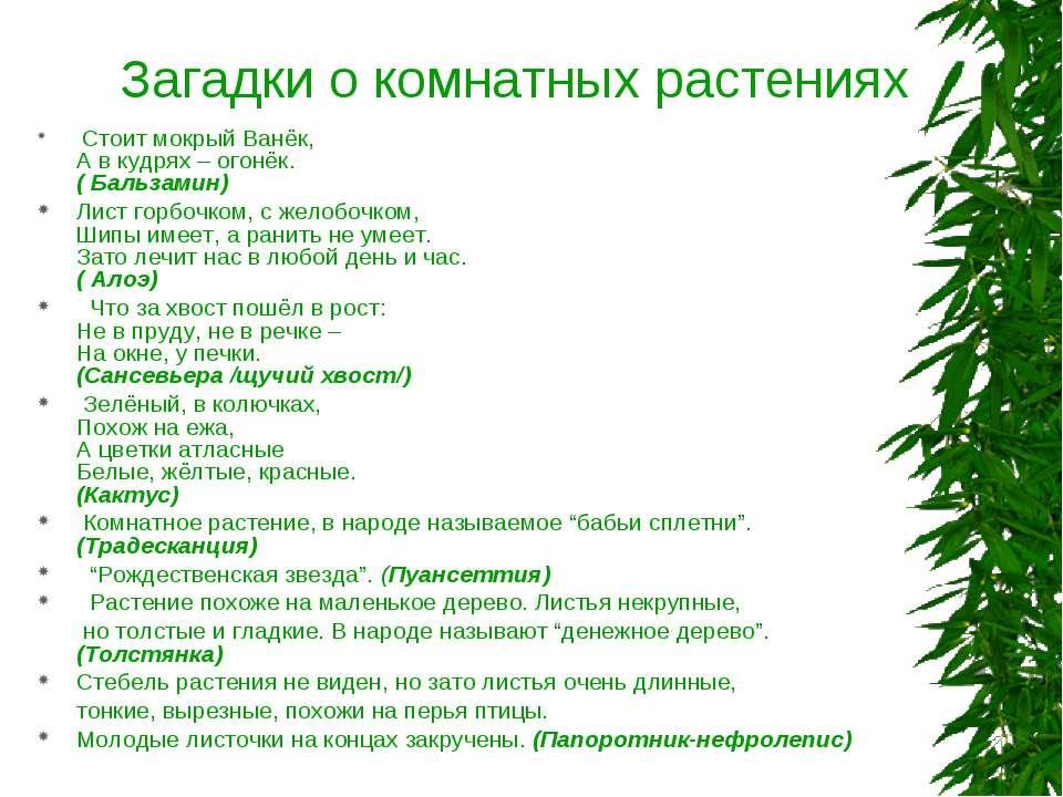 Загадки о комнатных растениях Стоит мокрый Ванёк, А в кудрях – огонёк. ( Баль...