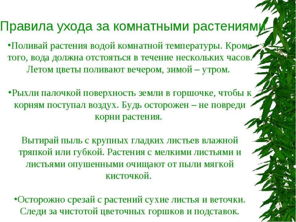 Уход За Комнатными Растениями Схемы И Картинки