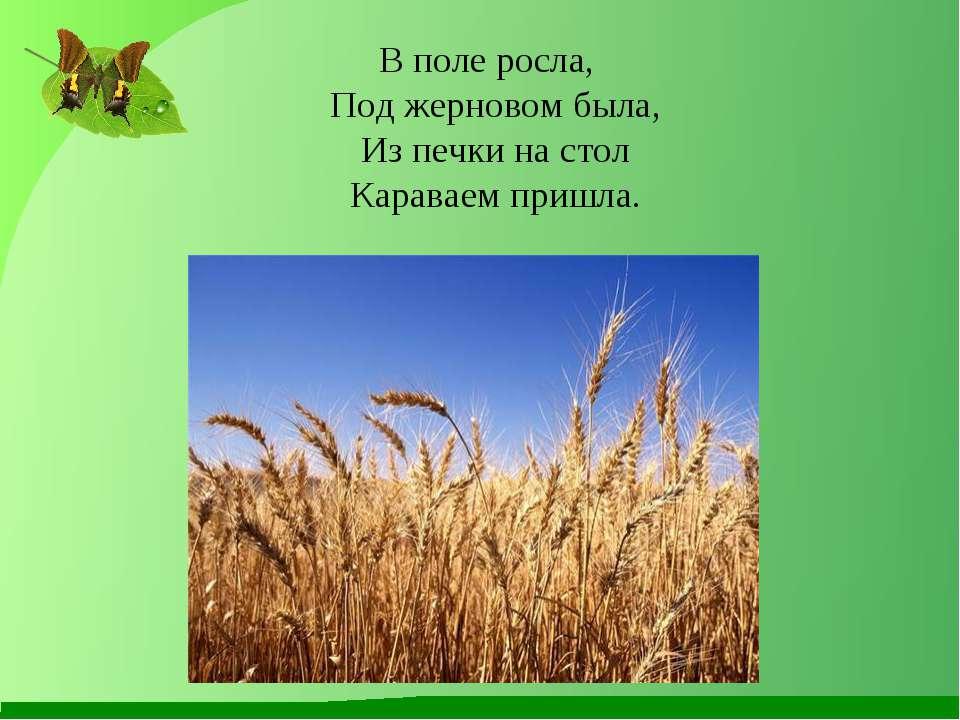 В поле росла, Под жерновом была, Из печки на стол Караваем пришла.