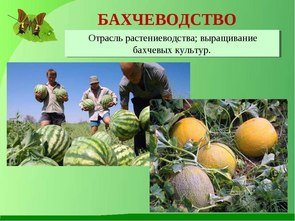 Презентация на тему:  растения культурные и дикорастущие