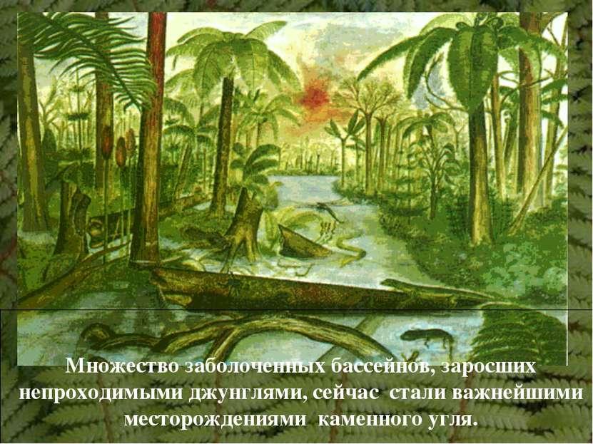 Множество заболоченных бассейнов, заросших непроходимыми джунглями, сейчас ст...