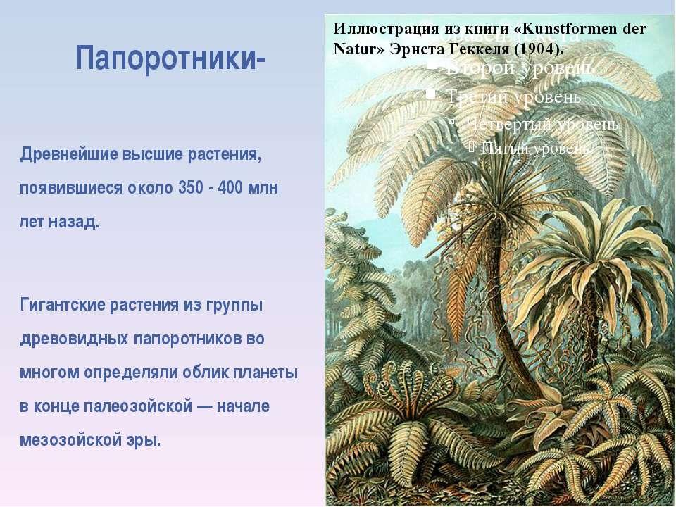 Папоротники- Древнейшие высшие растения, появившиеся около 350 - 400 млн лет ...