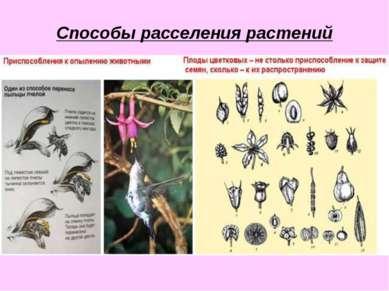 Способы расселения растений