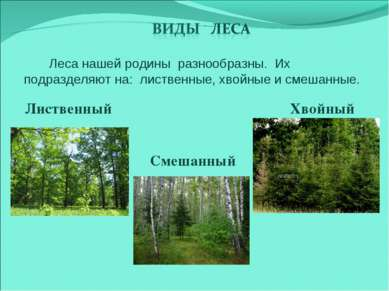 Смешанный Лиственный Хвойный Леса нашей родины разнообразны. Их подразделяют ...