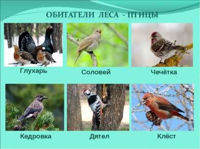 Кедровка Соловей Глухарь Клёст Дятел Чечётка