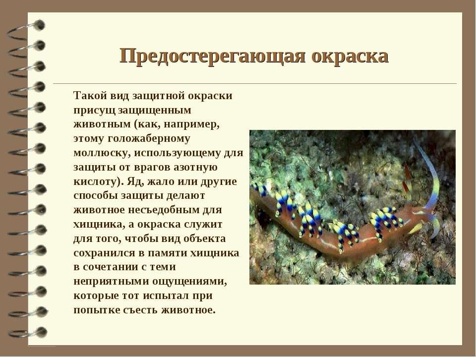 Предостерегающая окраска Такой вид защитной окраски присущ защищенным животны...