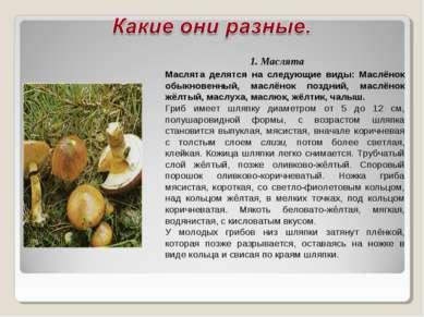 1. Маслята Маслята делятся на следующие виды: Маслёнок обыкновенный, маслёнок...
