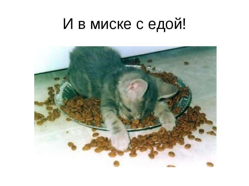 И в миске с едой!