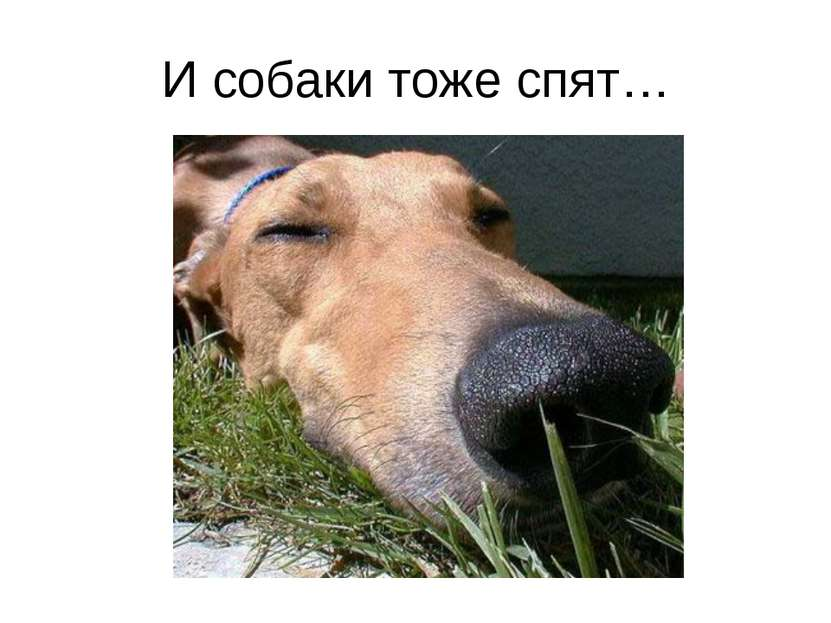 И собаки тоже спят…