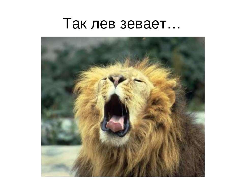 Так лев зевает…
