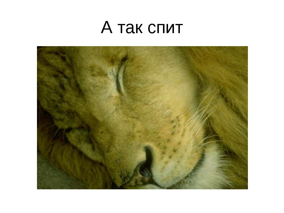А так спит