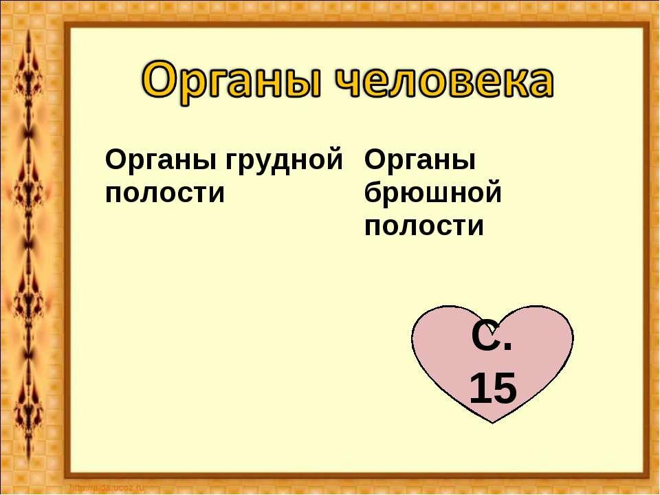 С. 15 Органы грудной полости Органы брюшной полости